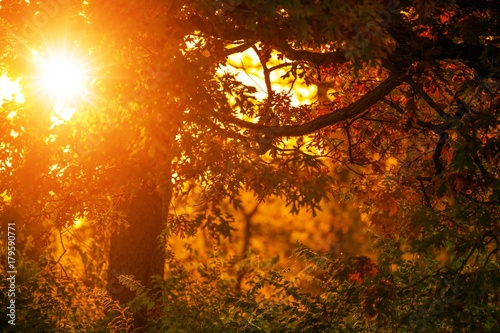 Fall Foliage and Sunset