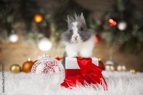 Poster Little bunny,Funny rabbit on Christmas background