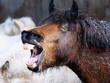 冬の馬 - 179614163