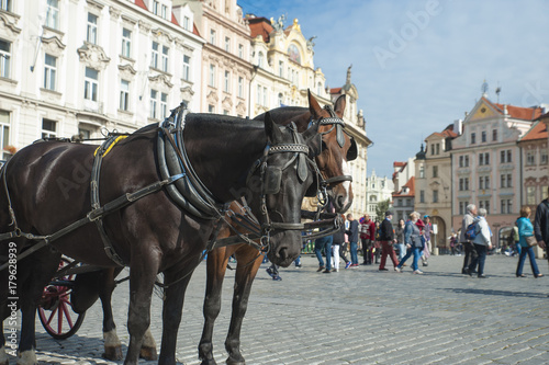 2 horses in Old Town Prague Poster