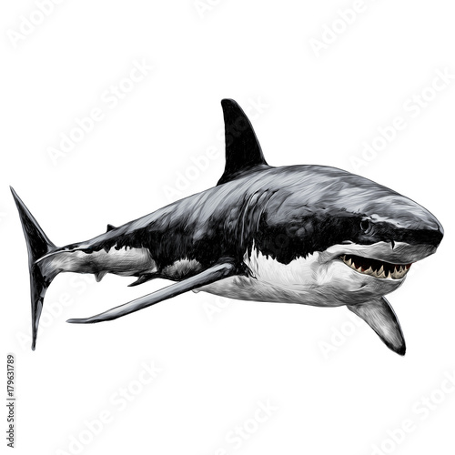 shark sketch vector graphics color picture