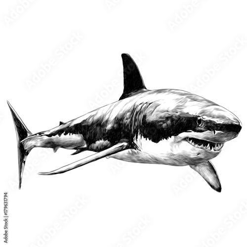 Fototapeta shark sketch vector graphics monochrome black-and-white drawing