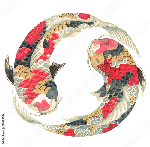 Japanese koi on white background. Illustration of the avaricious with Asian carp floating in a circle © Арина Трапезникова
