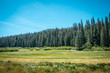 Fields, forests and meadows of the Yosemite Valley. California, United States