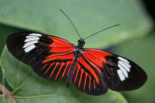 Fotobehang Vlinder butterfly4