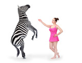 Show girl performing with Zebra on white background. - 179651140