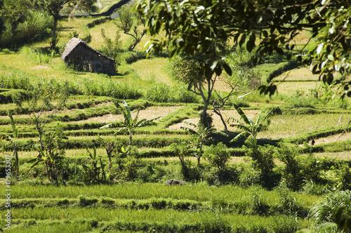 Deurstickers Bali Green paddy field in Bali
