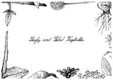 Hand Drawn of Leafy and Salad Vegetable