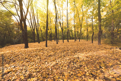 Fotobehang Oranje autumn forest on sunny day