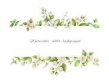 Watercolor vector banner of flowers Jasmine and mint branches isolated on white background. - 179669330