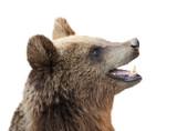 Brown bear (Ursus arctos) - 179672196