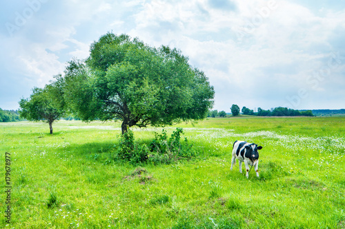 Poster Lime groen Cow on the green field with big tree. Rural landscape