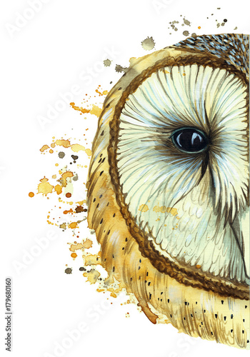 Aluminium Uilen cartoon watercolor drawing of an animal predator bird owl, common owl, portrait of an owl, white owl, feathers, white background for decor and decoration, for embroidery