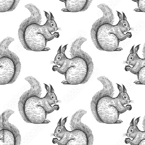 Seamless pattern with Squirrel. - 179680751