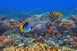 Tropical Fish and Coral Reef - 179680906