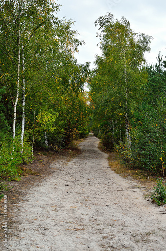 Aluminium Weg in bos Droga przez las w pochmurny dzień.