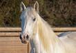 Horse - 179682985