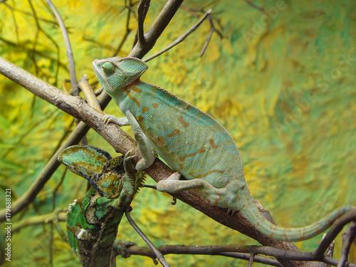 Aluminium Kameleon chameleon camouflage
