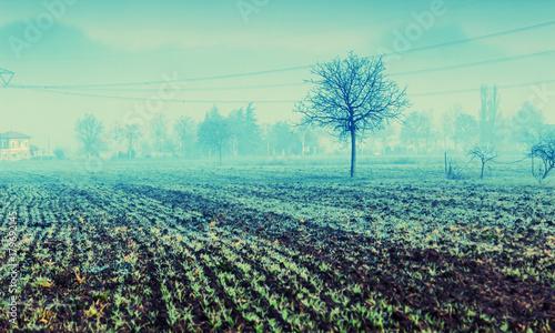 Fotobehang Lente Mist on the field, typical rural Italian landscape