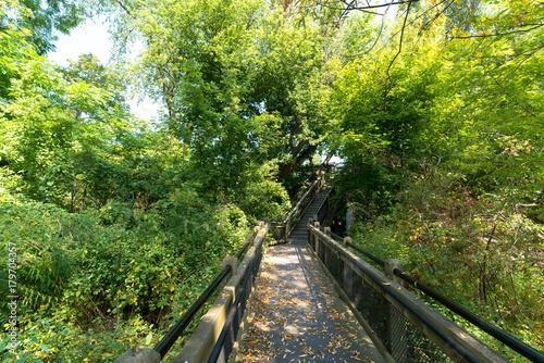 Papiers peints Route dans la forêt Steps Along Boardwalk