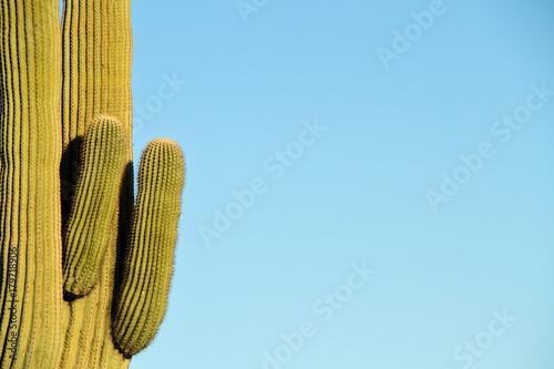 Aluminium Arizona Saguaro with Blue Copy Space