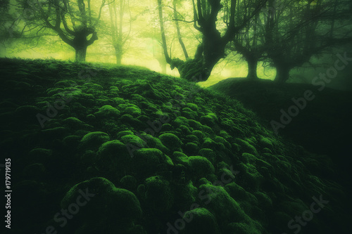 Fotobehang Betoverde Bos magic deep forest with moss bubbles