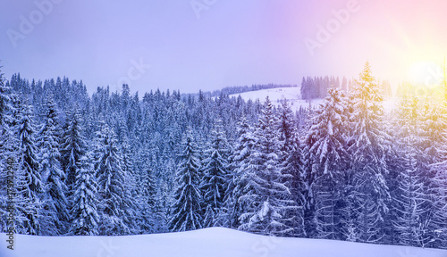 Foto op Plexiglas Natuur Christmas winter landscape, spruce and pine trees covered in snow on a mountain road
