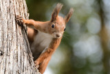 the squirrel climbs the tree and the grass