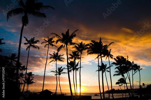Aluminium Strand The Setting Sun through the Palms of Life
