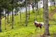 Cavalos no pasto.