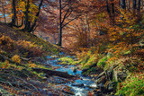 Fall scene in a beech forest with mountain creek