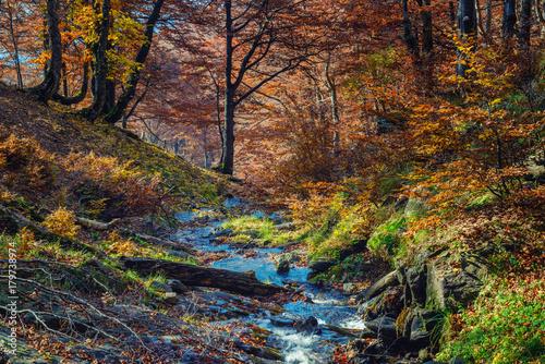 Papiers peints Rivière de la forêt Fall scene in a beech forest with mountain creek