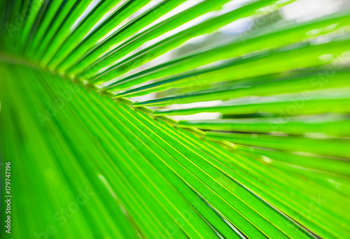 Palm leaves, plant over nature background, beautiful tree - 179747196