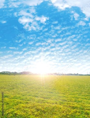 Foto op Plexiglas Artist KB Summer shot of a fresh, green meadow