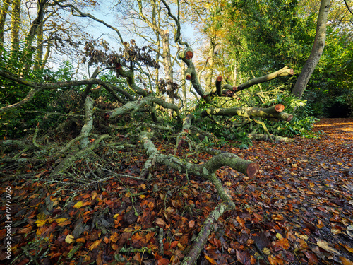 Fotobehang Zwart Early Autumn countryside morning,Northern Ireland