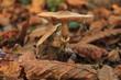 Big mushroom in the autumn