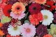 Colorful gerber bouquet