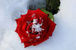 Red rose in the snow