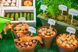 Labeled Display Variety of Nuts in Shells and Potted Herbs