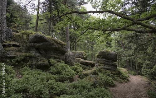 Aluminium Weg in bos Chemin sur le mont Sainte-Odile à Ottrott, Bas-Rhin, France