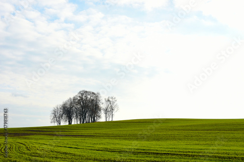 Fotobehang Wit Island of autumn trees in a green field