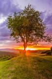 drzewo o zachodzie słońca - 179821323