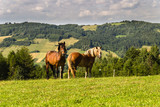 Fototapeta Horses - konie © byfor