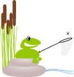 Frosch sitzt am Teich und fängt Fliege