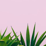 Plant o pink. Outdoors. Minimal design. Fashion for prints - 179828775