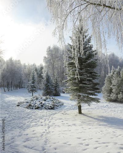 Fotobehang Berkenbos Snow-covered trees in the city park