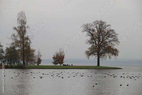 Landzunge mit Bäumen - 179842321