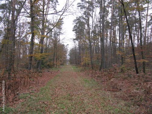 Foto op Plexiglas Weg in bos balade en forêt