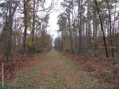 Fotobehang Weg in bos balade en forêt