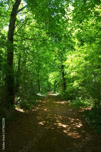 Foto op Plexiglas Groene Green Trees in Forest. Beautiful Alley In Park.